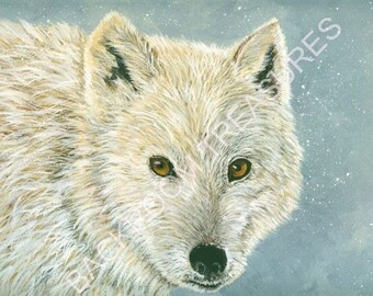Lone Wolf in the snow Fine Art Print