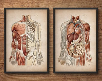 Anatomy print set, Human anatomy posters, Anatomy home decor, Anatomy posters, Anatomy illustrations, Large prints, Medical gift