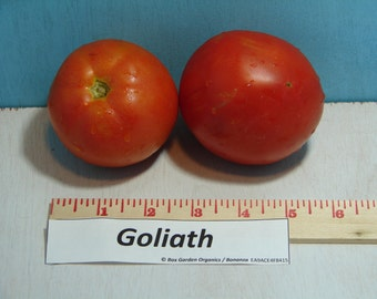 Red Goliath Tomato Heirloom Garden Seed Non-GMO  30+ seeds Naturally Grown Open Pollinated Gardening
