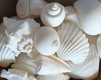 White Seashell Mix (12-15 pcs.)