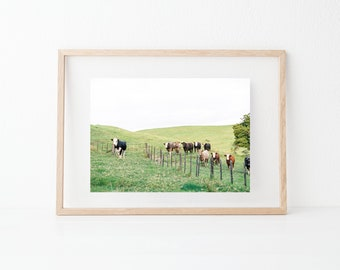 "Rural nature photography ""Cows in a meadow"" 