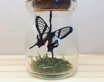 Mini Rustic Bottle | Flutter by Katie | Butterfly Display | All Natural | Accent Jar | Invisible Angel Butterfly | Sculpture | Home Decor
