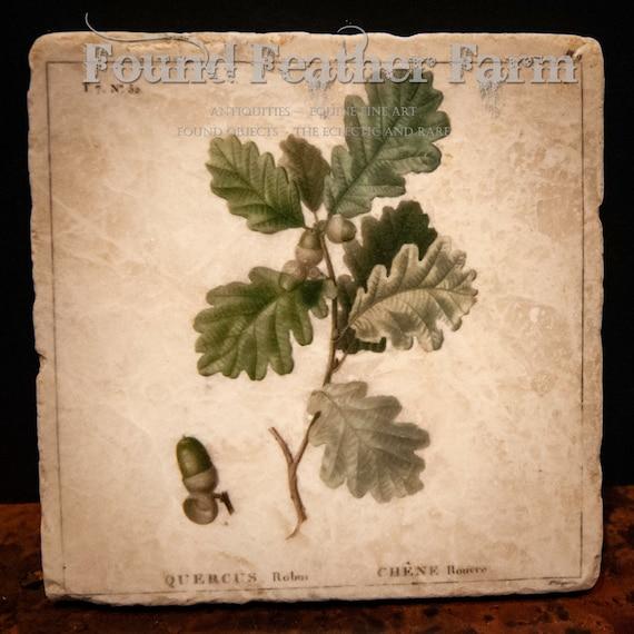Tumbled Stone Beverage Coasters with Vintage Oak Leaf Images