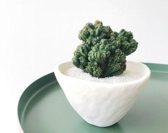 Maude Cactus + White Cactus Cactus Cup Handmade Ceramic Planter - Large