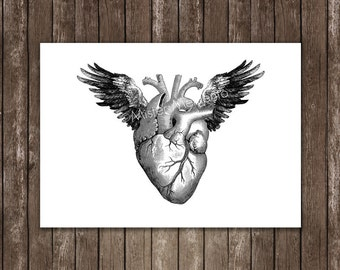 anatomy art winged heart art print