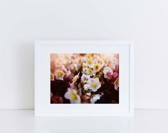 """Fine Art Wall Decor Print: Pink Petals (12' x 10"""")"""