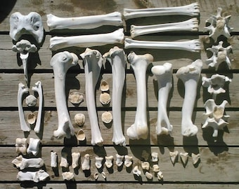 CLEAN Wild Animal Bones by-the-pound. Sanitized/Boiled for Crafting/Jewelry/Sculpture/Costumes/Dino-Dig, Movie/TV/Theater Haunted House Prop