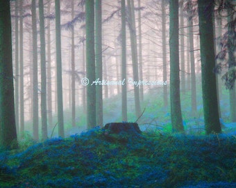 fantasy forest photo, surreal woods photo, foggy forest, trees print, fog in forest, surreal nature photography, fantasy forest wall art