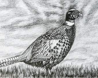 Hand-drawn Pheasant Print