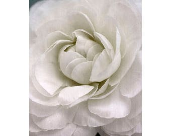Wedding Card, White Rose Floral Art Photo Greeting Card