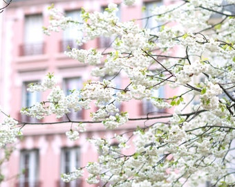 Paris Photograph -  April in Paris, White Cherry Blossoms, Large Wall Art, French Home Decor