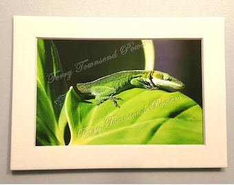 Sleeping Lizard Green on Green 4x6 Matted & Signed Print