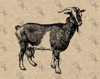 Vintage image Goat Farm Country picture Instant Download printable clipart digital graphic for fabric transfer, t-shirts, bags etc 300dpi