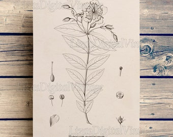 Floral print, Antique wall art, Flower printable, Botanical print vintage, Botanical, Printable graphics, Download prints, PNG JPG 300dpi