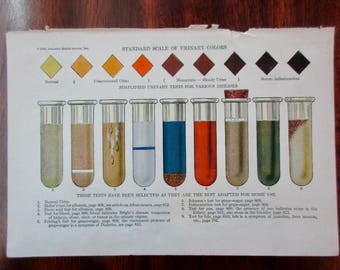 original page - 1919 color MEDICAL CHART from antique medical book - urine, test tube
