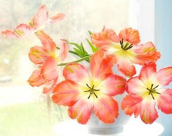 Orange Tulip Art, Still Life Photography,  ParrotTulip,  Floral Art Print, Colorful Decor, Tulip Photography