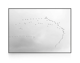Minimalist Bird Print, Scandinavian Photography, Minimalist Bird Print, Nordic Photography, Scandinavian Photo, Flock Of Birds, Scandi Print