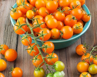 Gold Nugget Tomato Heirloom Garden Seed Non-GMO 30+ Seeds Rare Naturally Grown Open Pollinated Gardening