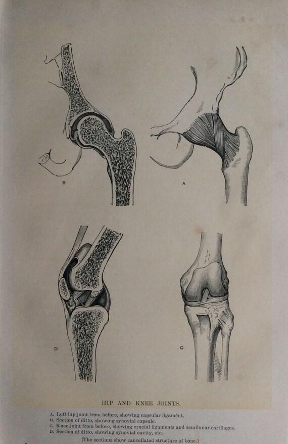 Dorable Diagrama De Cadera Elaboración - Imágenes de Anatomía Humana ...
