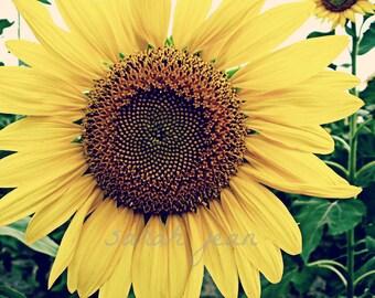 Summer Sun 5 X 7
