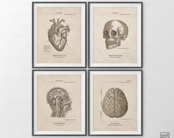 French Anatomical Posters, 4 Set, Anatomy Prints, Vintage Anatomy Prints, Skull, Skeleton, Human Anatomical Chart, Anatomie Humaine