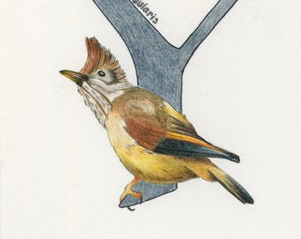 Avian Alphabet Y