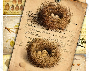 EGGS AND NEST shabby chic - Digital collage sheet printable download journaling birds nature nest eggs jewelry holder paper craft - ac258
