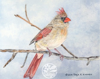 Northern Cardinal (female) - Giclee print of original watercolor/color pencil illustration.