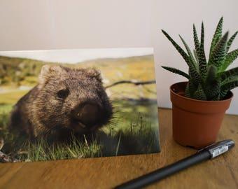 Nature Greeting Cards - Wombat - Australian Wildlife