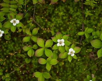 Woodland floor, Vermont Photography, Vermont Mountains, Vermont Flora