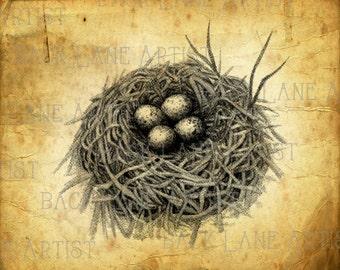 Vintage Bird Nest Clipart Lineart Illustration Instant Download PNG JPG Digi Line Art Image Drawing L123