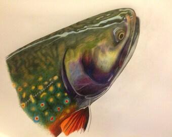 "Colored Pencil Brook Trout ORIGINAL 13.5x17"""