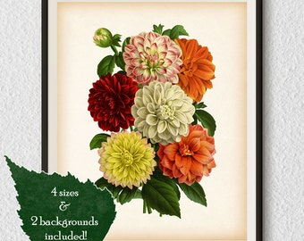 Dahlia wall art, Vintage print, Botanical illustration, Antique art, Print download, Botanical print, Restored illustration, Flower print #6