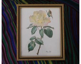 Vintage Kate Gerber 'Peace Rose' Framed Print, Beautiful Yellow Rose