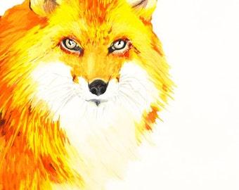 Fiery Fox Art Print 8x 10 Watercolor