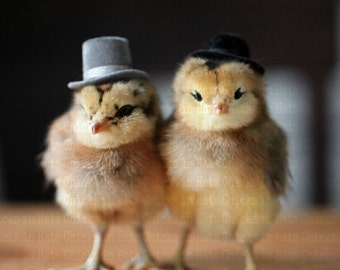 Chicks in Hats Chickens In Dapper Hats Rigid Rectangle Refrigerator Magnet