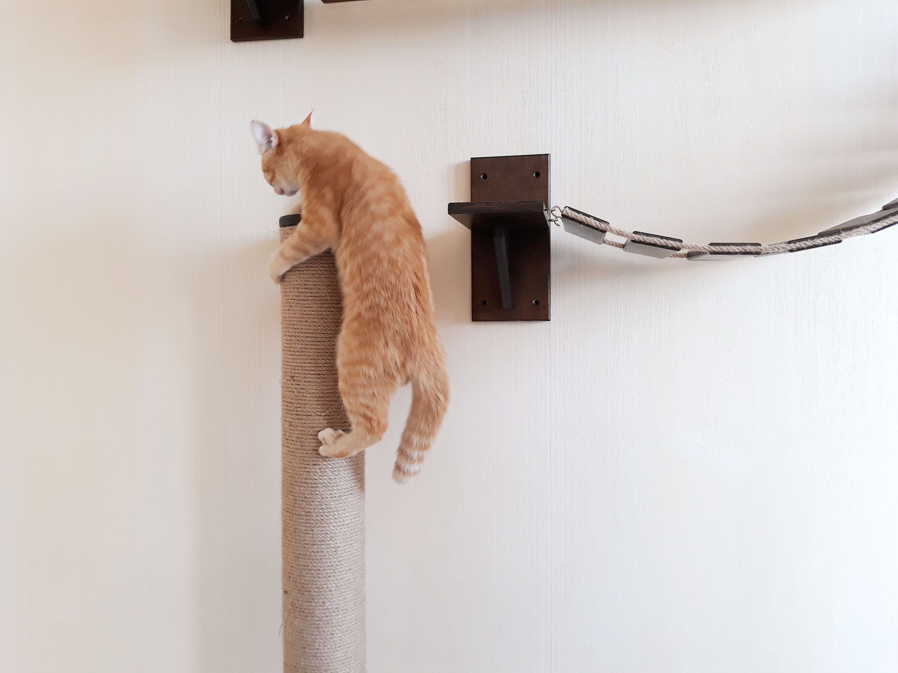 dp with climb larger track cat hammock mounted amazon com catastrophicreations unfinished shelves tree mod view handcrafted