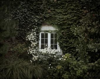 Old Window Photography, Window and Vines Print, Green and Cream Decor Fine Art Photography, Living Room Art, Shabby Chic Window Decor
