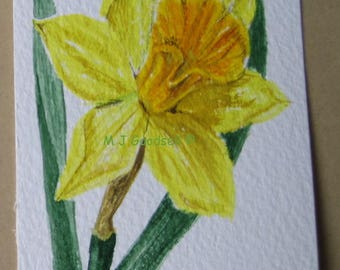 Yellow Daffodil - original watercolour ACEO