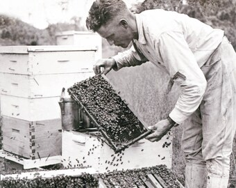 vintage photograph print Bee Keeper with his Hives Beekeeeper