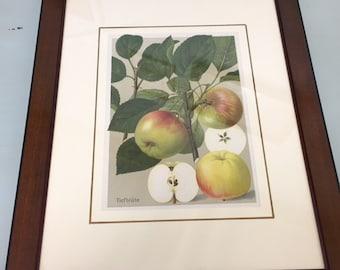 antique print framed fine '800