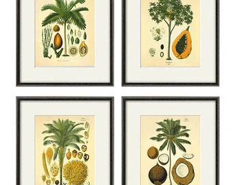 Antique botanical print set vintage Botanical art prints botanical poster palm tree art antique wall art garden wall decor plant art print