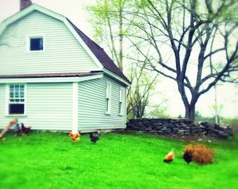 Maine Farm Life