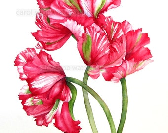 tulip watercolor-red white tulips-parrot tulip painting-parrot tulip watercolor-fine art print-flower painting-flower watercolor