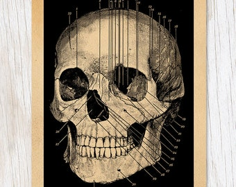 Anatomical Skull | Medcial Illustration Greeting Card | Science Stationery Biology Doctor Gift Anatomy, Medical Student, Physiology Skeleton