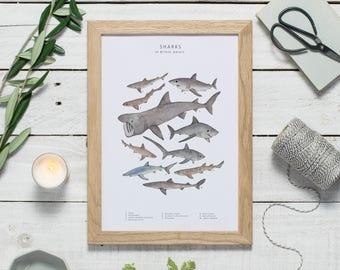 Shark print - watercolour shark art - shark wall art - animal print - wildlife art - shark illustration print - zoology print