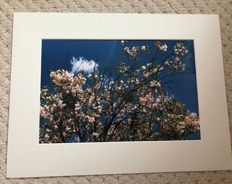 Blossom 12x8 print in a A4 mounted frame
