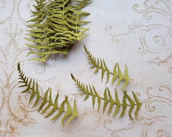 Die cut Fern Embellishments.  #H-41
