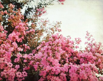"Crepe Myrtle Tree - Botanical Photograph -  Pink Flower Wall Art -  Floral Wall Art - Vintage Style - Bedroom Art  ""Crepe Myrtle"""