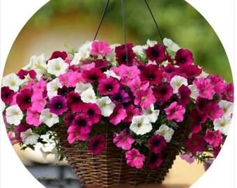 Beautiful Hanging Bonsai Petunia 200 Seeds mix colours garden flowers